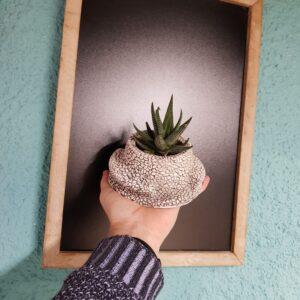 Macetero con cactus