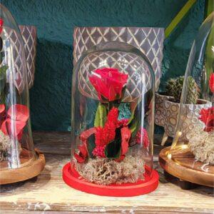 Cupula rosa roja eterna / preservada - San Valentin