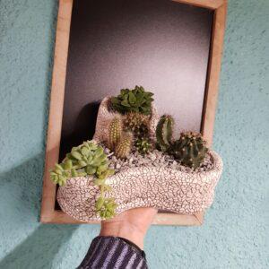 Composición de plantas crasas y cactus
