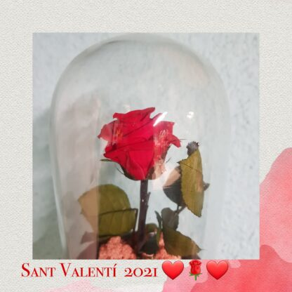 Cupula de cristal con base metalica. Rosa eterna de color roja